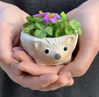 Mother's Day gift of Sweet Hedgehog Bowl